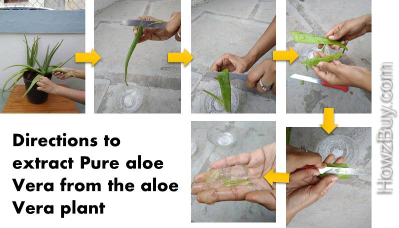 How to extract aloe vera from plant organic